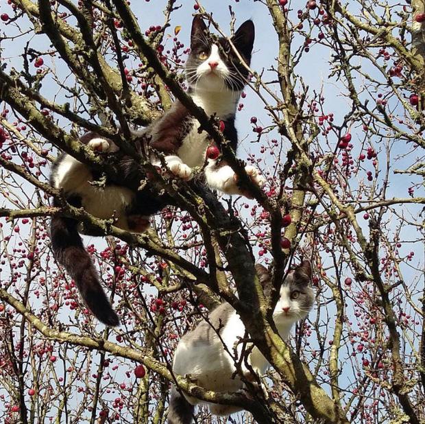 Những chú mèo được nuôi dạy bởi đám chim trời, chỉ thích tụ bạ ở ngọn cây - Ảnh 11.