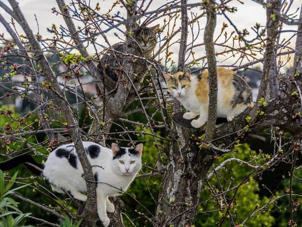 Những chú mèo được nuôi dạy bởi đám chim trời, chỉ thích tụ bạ ở ngọn cây - Ảnh 12.