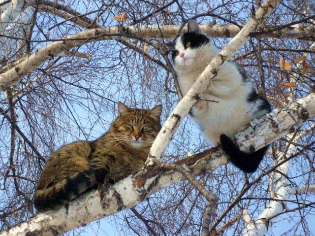 Những chú mèo được nuôi dạy bởi đám chim trời, chỉ thích tụ bạ ở ngọn cây - Ảnh 14.