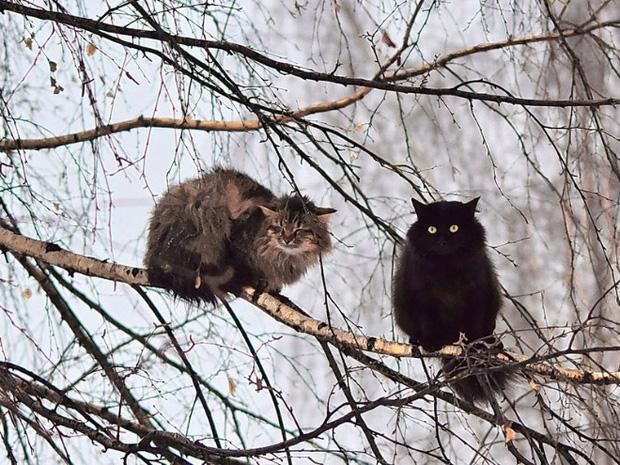 Những chú mèo được nuôi dạy bởi đám chim trời, chỉ thích tụ bạ ở ngọn cây - Ảnh 15.