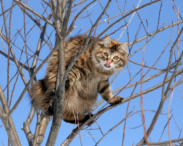 Những chú mèo được nuôi dạy bởi đám chim trời, chỉ thích tụ bạ ở ngọn cây - Ảnh 16.