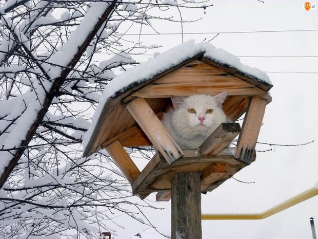 Những chú mèo được nuôi dạy bởi đám chim trời, chỉ thích tụ bạ ở ngọn cây - Ảnh 17.