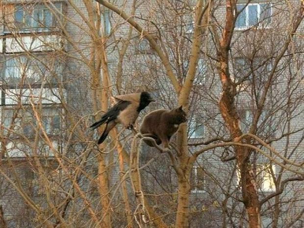 Những chú mèo được nuôi dạy bởi đám chim trời, chỉ thích tụ bạ ở ngọn cây - Ảnh 3.