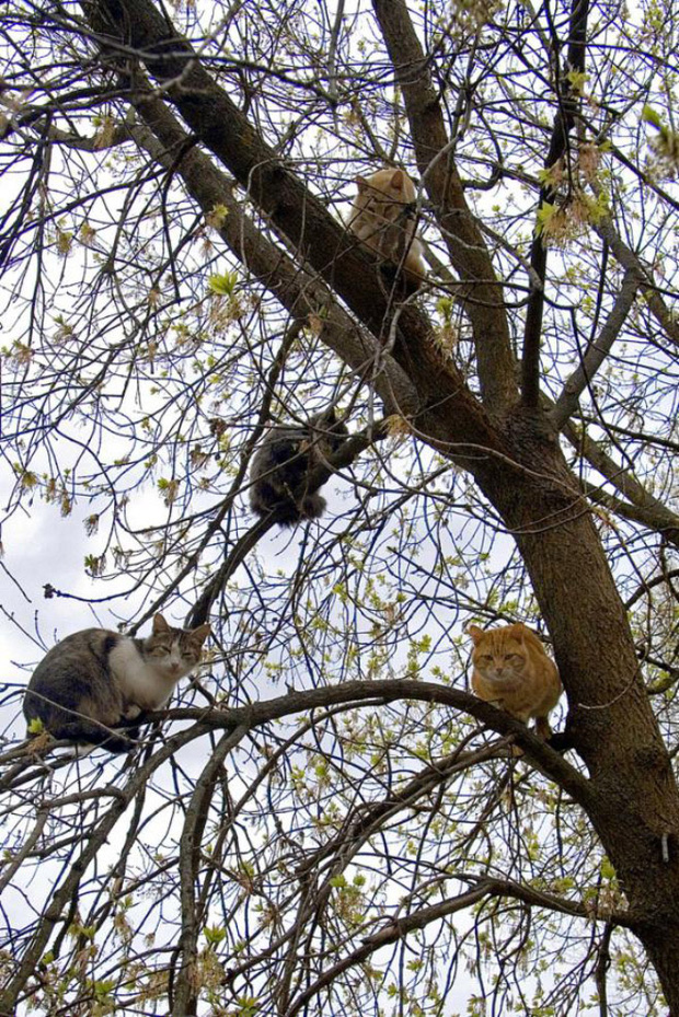 Những chú mèo được nuôi dạy bởi đám chim trời, chỉ thích tụ bạ ở ngọn cây - Ảnh 4.