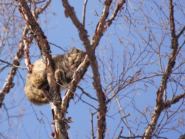 Những chú mèo được nuôi dạy bởi đám chim trời, chỉ thích tụ bạ ở ngọn cây - Ảnh 6.