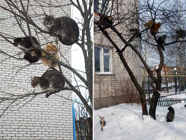 Những chú mèo được nuôi dạy bởi đám chim trời, chỉ thích tụ bạ ở ngọn cây - Ảnh 7.