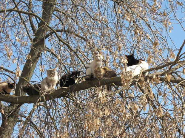 Những chú mèo được nuôi dạy bởi đám chim trời, chỉ thích tụ bạ ở ngọn cây - Ảnh 9.