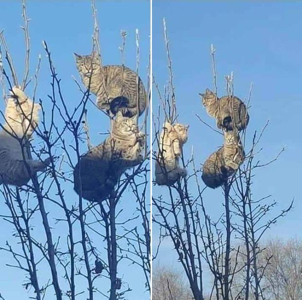 Những chú mèo được nuôi dạy bởi đám chim trời, chỉ thích tụ bạ ở ngọn cây - Ảnh 10.