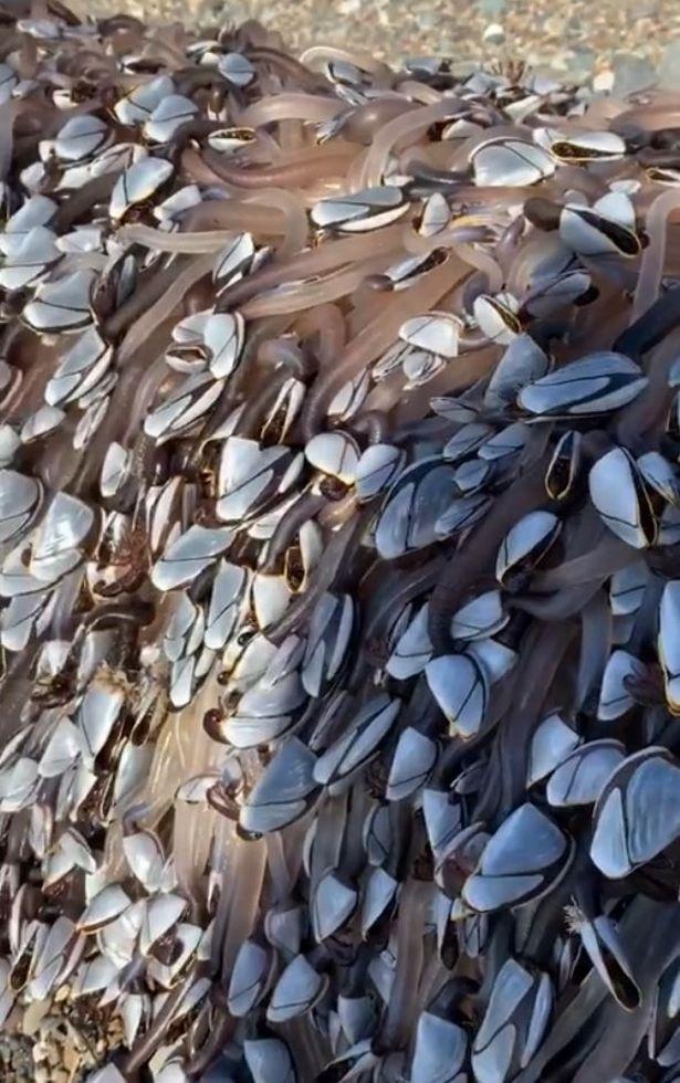 Đi dạo trên bãi biển, cặp đôi bất ngờ giàu to khi nhặt được sinh vật hiếm trị giá bạc tỷ - Ảnh 2.