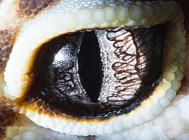 Sâu thẳm bên trong đôi mắt của các loài vật có gì? Loạt ảnh được zoom cận cảnh sau đây chính là câu trả lời cho điều đó - Ảnh 1.