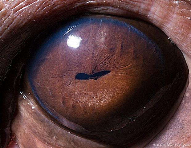 Sâu thẳm bên trong đôi mắt của các loài vật có gì? Loạt ảnh được zoom cận cảnh sau đây chính là câu trả lời cho điều đó - Ảnh 2.