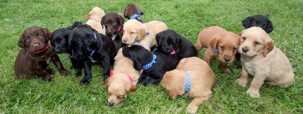 Định triệt sản chó cưng nhưng do lịch hẹn lùi lại, bà mẹ choáng váng trước 1 thứ nhận được - Ảnh 4.