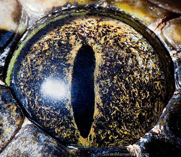 Sâu thẳm bên trong đôi mắt của các loài vật có gì? Loạt ảnh được zoom cận cảnh sau đây chính là câu trả lời cho điều đó - Ảnh 11.
