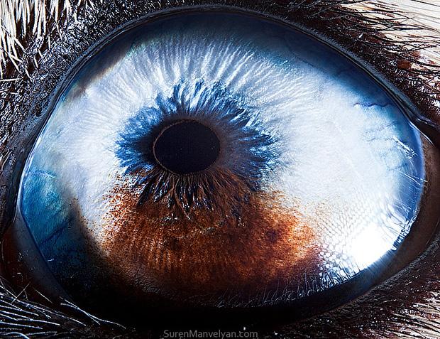 Sâu thẳm bên trong đôi mắt của các loài vật có gì? Loạt ảnh được zoom cận cảnh sau đây chính là câu trả lời cho điều đó - Ảnh 12.