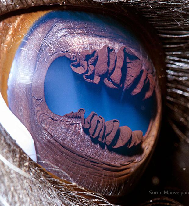 Sâu thẳm bên trong đôi mắt của các loài vật có gì? Loạt ảnh được zoom cận cảnh sau đây chính là câu trả lời cho điều đó - Ảnh 13.