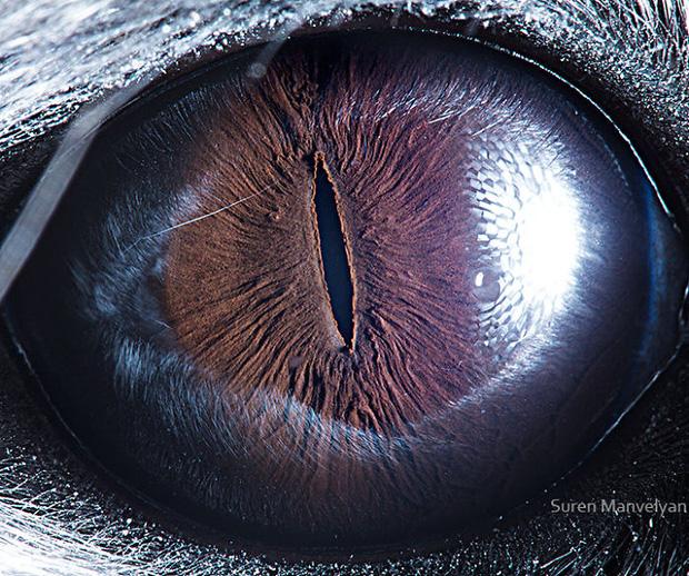 Sâu thẳm bên trong đôi mắt của các loài vật có gì? Loạt ảnh được zoom cận cảnh sau đây chính là câu trả lời cho điều đó - Ảnh 14.