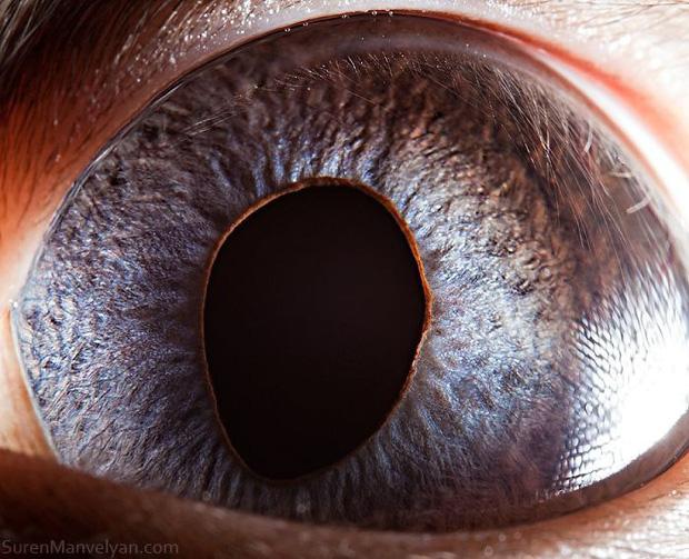 Sâu thẳm bên trong đôi mắt của các loài vật có gì? Loạt ảnh được zoom cận cảnh sau đây chính là câu trả lời cho điều đó - Ảnh 15.
