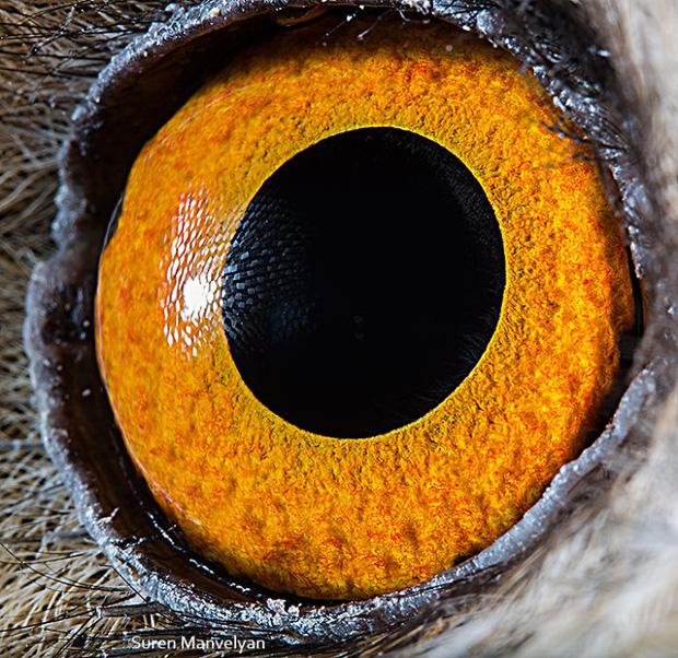 Sâu thẳm bên trong đôi mắt của các loài vật có gì? Loạt ảnh được zoom cận cảnh sau đây chính là câu trả lời cho điều đó - Ảnh 16.