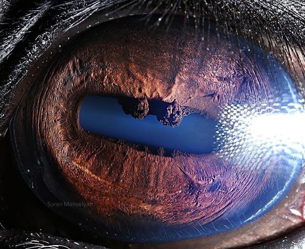 Sâu thẳm bên trong đôi mắt của các loài vật có gì? Loạt ảnh được zoom cận cảnh sau đây chính là câu trả lời cho điều đó - Ảnh 24.