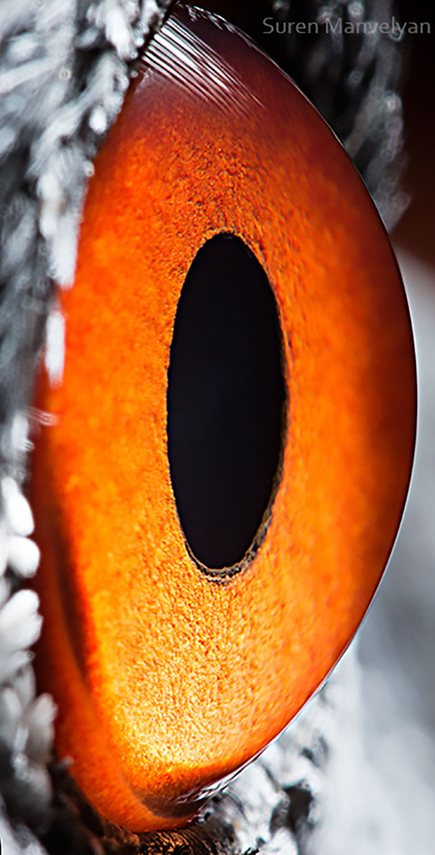 Sâu thẳm bên trong đôi mắt của các loài vật có gì? Loạt ảnh được zoom cận cảnh sau đây chính là câu trả lời cho điều đó - Ảnh 4.