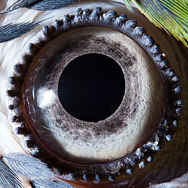 Sâu thẳm bên trong đôi mắt của các loài vật có gì? Loạt ảnh được zoom cận cảnh sau đây chính là câu trả lời cho điều đó - Ảnh 6.