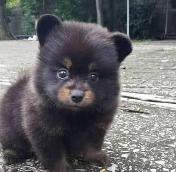Ông lão nhặt được chú chó nhỏ bên đường nhưng lớn lên nó không hề sủa: Hậu quả quá nghiêm trọng! - Ảnh 1.