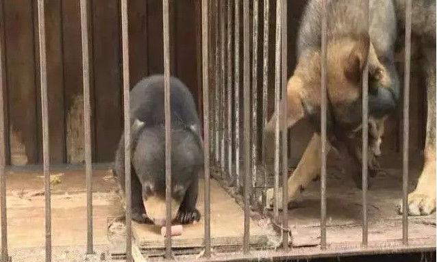 Ông lão nhặt được chú chó nhỏ bên đường nhưng lớn lên nó không hề sủa: Hậu quả quá nghiêm trọng! - Ảnh 3.