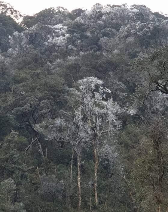 Trời hửng nắng nhưng tuyết vẫn rơi dày đặc, phủ trắng rừng cây ở biên giới Nghệ An - Ảnh 6.
