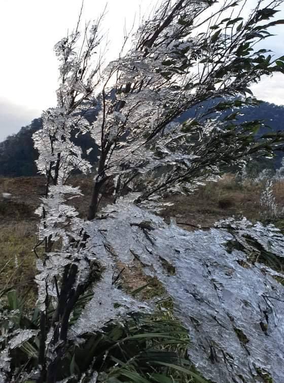 Trời hửng nắng nhưng tuyết vẫn rơi dày đặc, phủ trắng rừng cây ở biên giới Nghệ An - Ảnh 7.