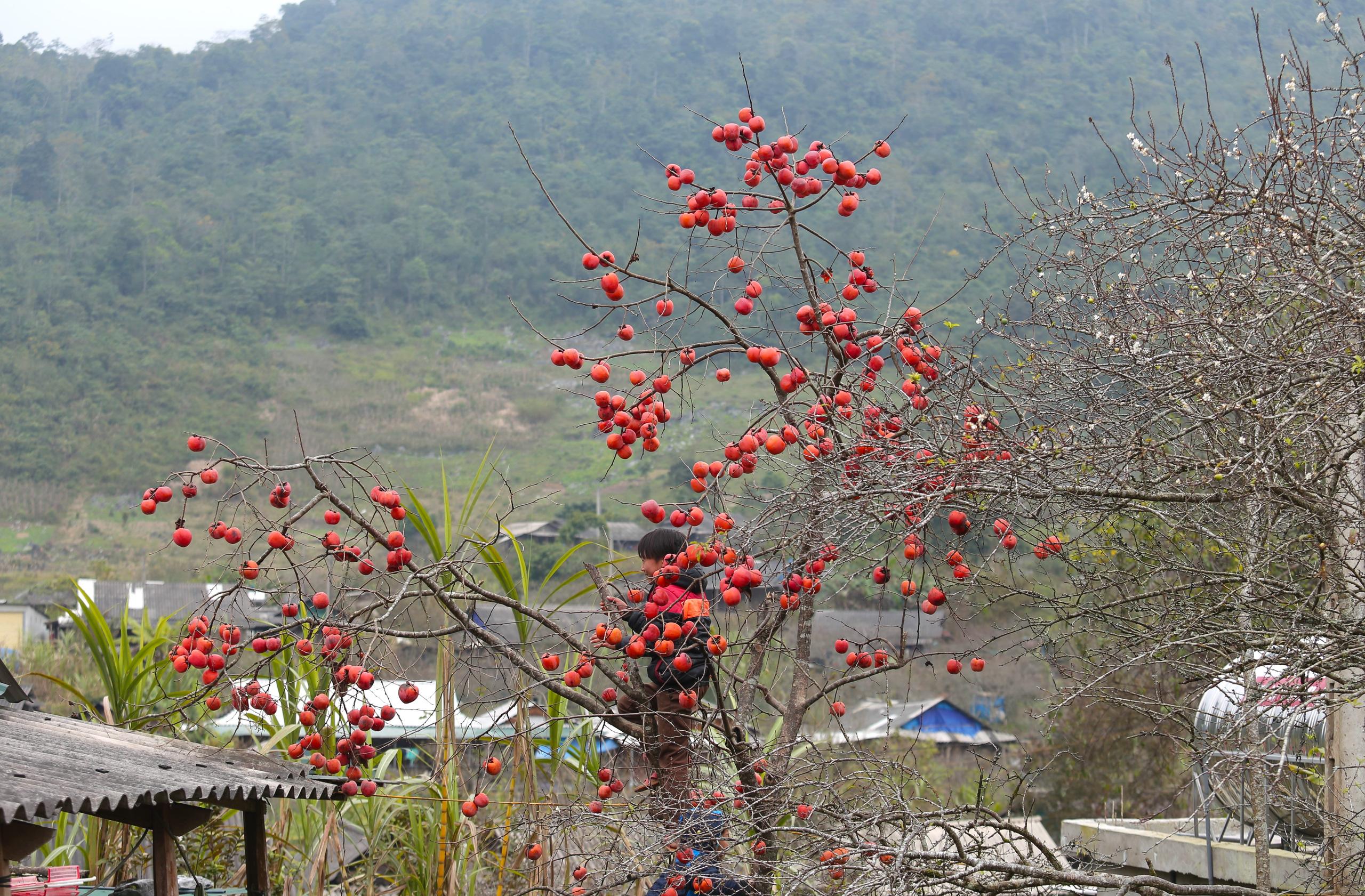 Nghệ An: Hoa đào, hoa mận nở bung tuyệt đẹp trong giá rét trước khi Tết về - Ảnh 7.