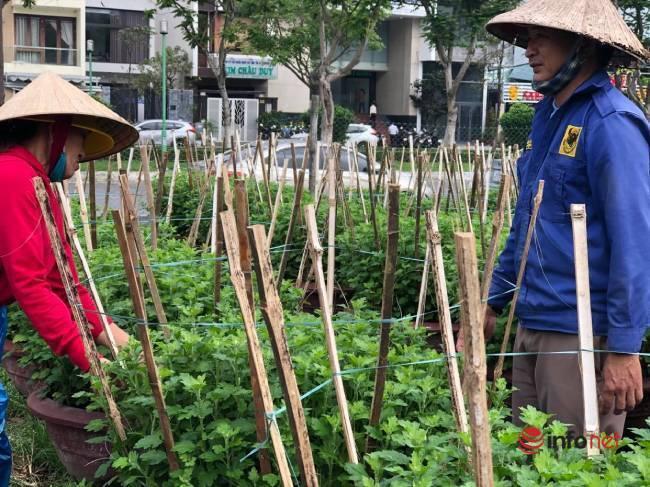 Trồng hoa Tết bán cho thị trường miền Trung, sát Tết chủ vườn rầu rĩ mong thương lái - Ảnh 4.