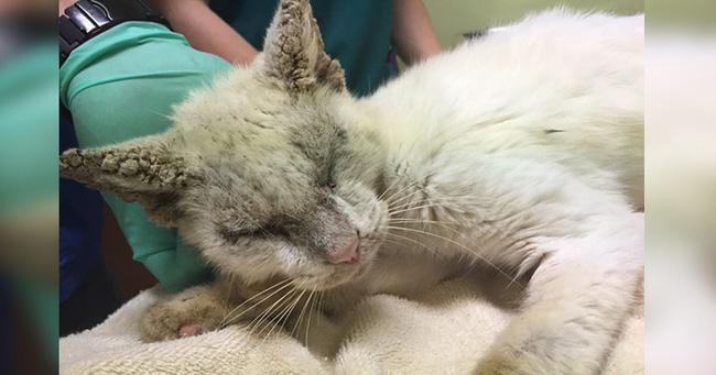 Nhận nuôi chú mèo mù lòa thân tàn ma dại, cô gái giúp con vật lột xác thần kỳ nhưng ngỡ ngàng hơn khi nó mở to đôi mắt - Ảnh 1.