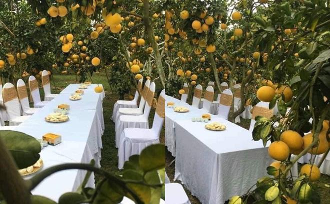 Đám cưới trong vườn cam sai trĩu quả khiến dân mạng trầm trồ nhưng vẫn lo ngại một nguy cơ
