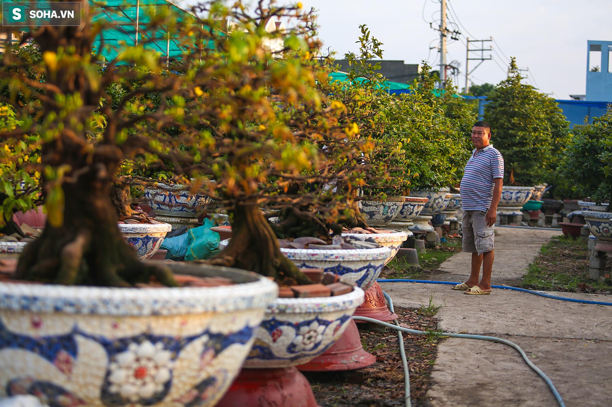 [Ảnh] Hàng nghìn cây mai nở sớm trước Tết cả tháng, chủ vườn mất trắng 15 tỷ đồng - Ảnh 10.