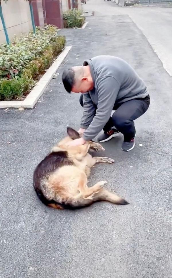 Gặp lại HLV sau nhiều năm, chú chó nghiệp vụ có phản ứng đặc biệt làm ai cũng sững sờ - Ảnh 1.