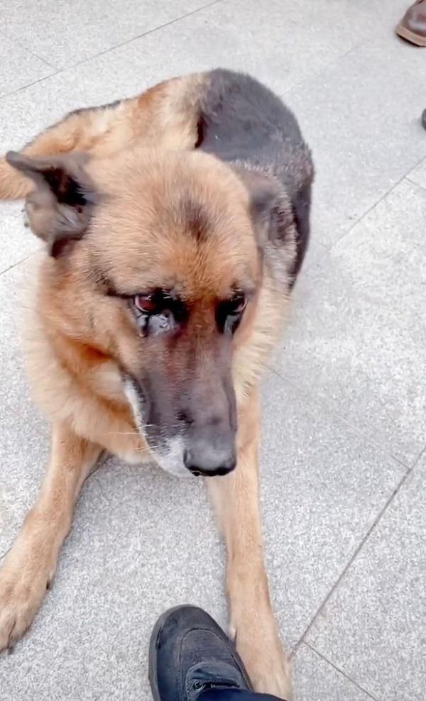 Gặp lại HLV sau nhiều năm, chú chó nghiệp vụ có phản ứng đặc biệt làm ai cũng sững sờ - Ảnh 2.