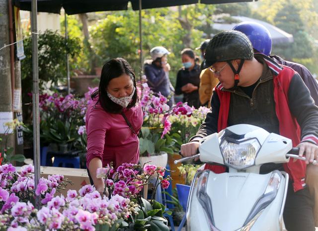Người dân Thủ đô tranh nhau mua địa lan siêu đẹp giá 130.000 đồng/giỏ chơi Tết - Ảnh 12.