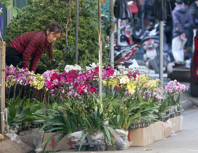 Người dân Thủ đô tranh nhau mua địa lan siêu đẹp giá 130.000 đồng/giỏ chơi Tết - Ảnh 7.