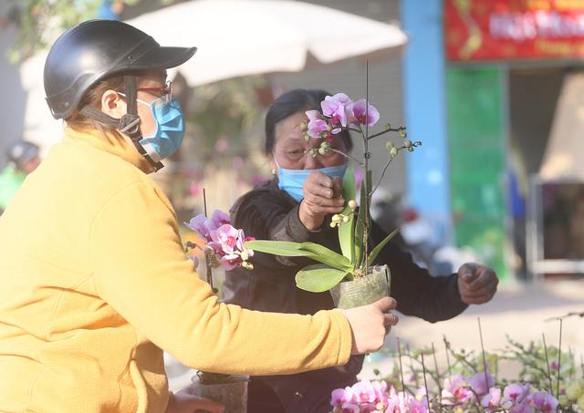 Người dân Thủ đô tranh nhau mua địa lan siêu đẹp giá 130.000 đồng/giỏ chơi Tết - Ảnh 9.