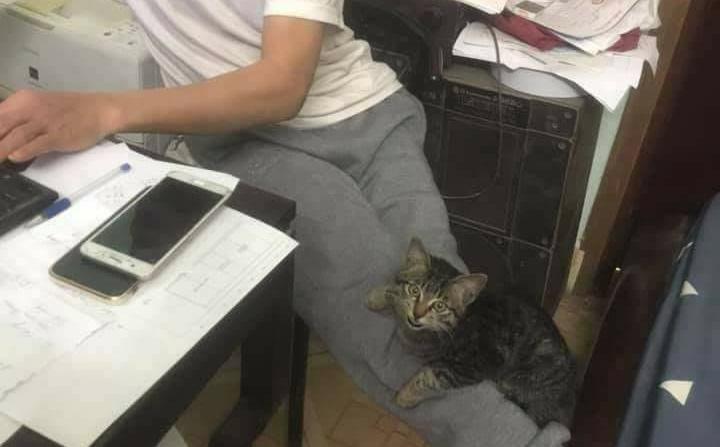 """Con gái định nuôi mèo, bố dọa """"ném ra đường"""" và cái kết không thể ngờ mỗi sáng ngủ dậy"""