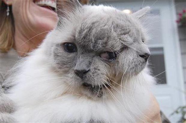 Chú mèo 2 đầu trông như photoshop nhưng khiến nhân loại há hốc với khả năng sống sót và loạt sự vụ có thật nhưng ai cũng nghĩ là đồ pha ke - Ảnh 1.