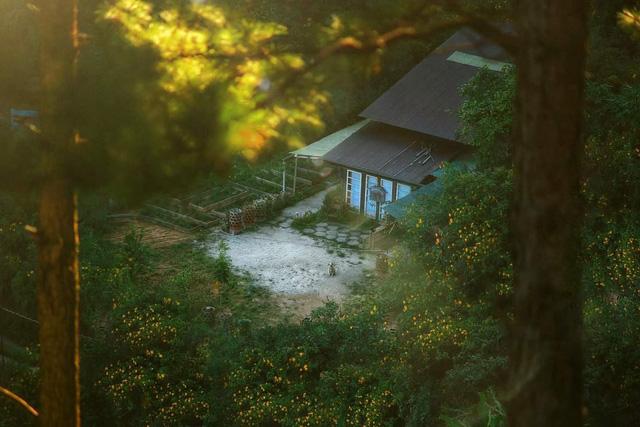 Chàng trai bỏ du học về Đà Lạt dựng ngôi nhà gỗ xinh xắn, làm nông trại và kể câu chuyện thời thanh xuân của riêng mình - Ảnh 4.