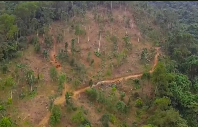 2 cán bộ quản lý rừng bị bắt vì tự ý chặt rừng bán cho người dân - Ảnh 1.