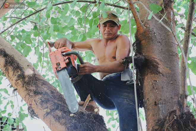 Gặp vua khỉ U50 ở miền Tây: 27 năm thích leo trèo, dù bị ong chích, kiến đốt đến phát sốt vẫn thấy bình thường - Ảnh 1.