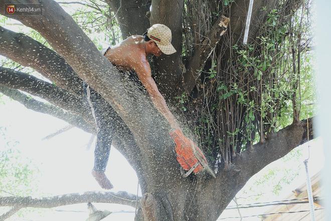Gặp vua khỉ U50 ở miền Tây: 27 năm thích leo trèo, dù bị ong chích, kiến đốt đến phát sốt vẫn thấy bình thường - Ảnh 11.