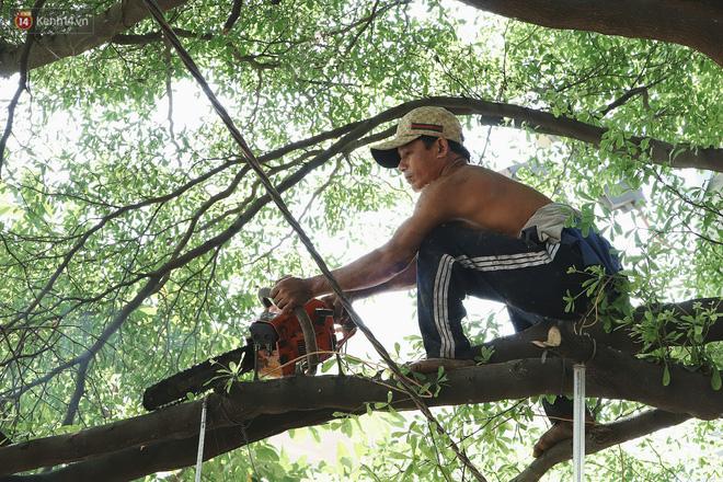 Gặp vua khỉ U50 ở miền Tây: 27 năm thích leo trèo, dù bị ong chích, kiến đốt đến phát sốt vẫn thấy bình thường - Ảnh 3.