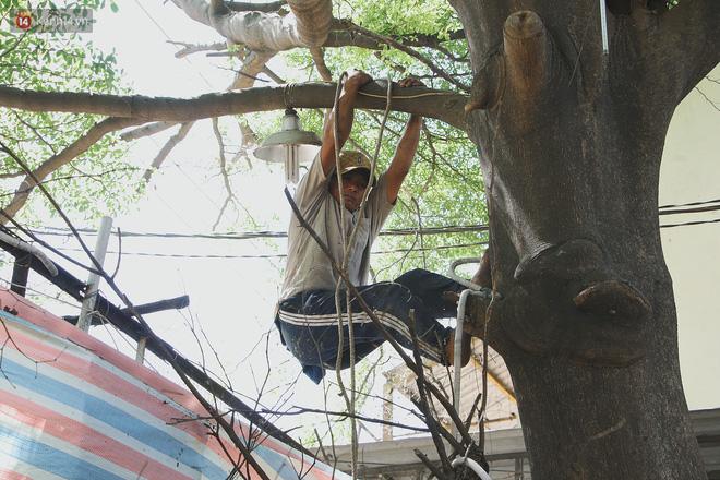 Gặp vua khỉ U50 ở miền Tây: 27 năm thích leo trèo, dù bị ong chích, kiến đốt đến phát sốt vẫn thấy bình thường - Ảnh 8.