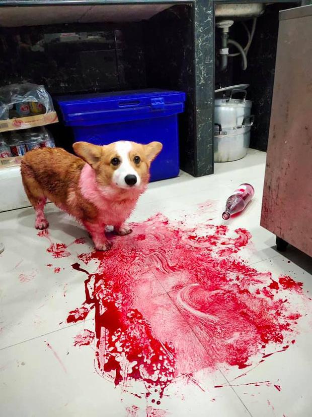 Tìm chó đi lạc, chàng trai kinh hãi phát hiện con vật đang nằm im trong vũng máu cạnh con dao nhưng sự thật đằng sau khiến ai cũng ngã ngửa - Ảnh 3.