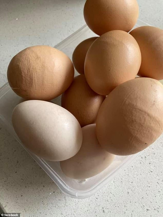 Đi thu gom trứng gà, bà mẹ thấy sự lồi lõm bất thường liền hỏi dân mạng và bất ngờ trước đáp án - Ảnh 1.