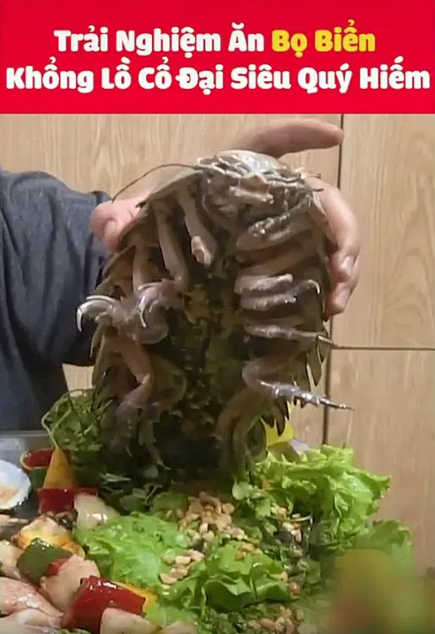 Màn review ăn thử món bọ biển khổng lồ giá 4 triệu/con, thịt của chúng liệu có ngon như tưởng tượng - ảnh 1